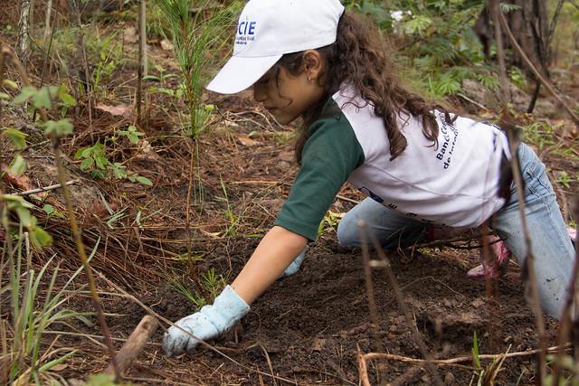 Plantación Honduras 2018