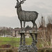 Stag on a Roundabout