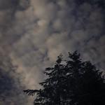 20180528-193140 Pano - Sky & Trees
