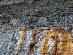 Bleeding unconformity (Chattanooga Shale over Cumberland Formation; Burkesville West Rt. 90 roadcut, Kentucky, USA) 4