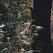 Hide & Seek by Tom Levold (www.levold.de/photosphere)