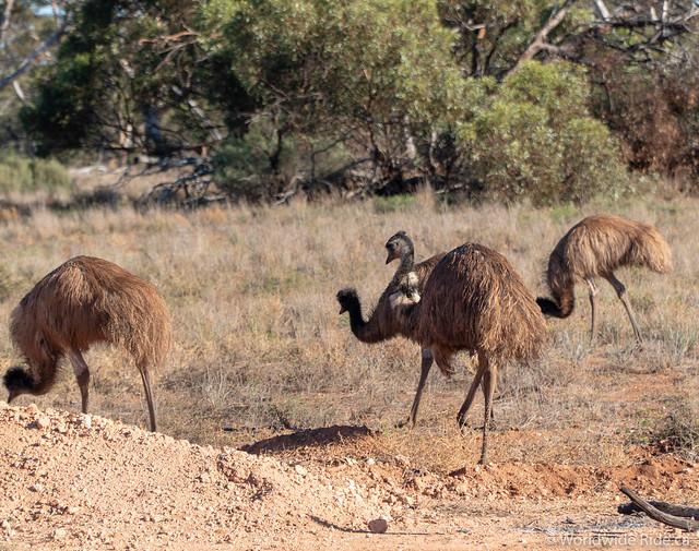 Western Australia-13