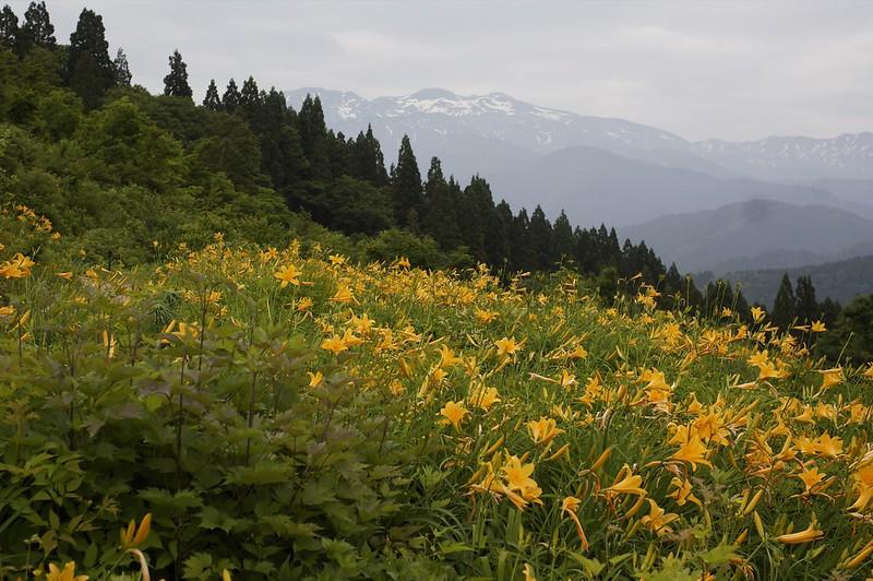 CONTAX Gレンズ総動員で挑む西山白山高山植物園その4
