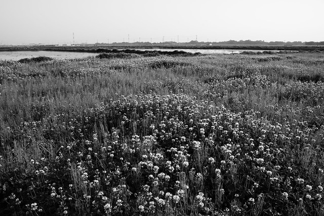 White clover, Nikon D810, AF Nikkor 28mm f/2.8D