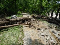 DSCN4072 04 Lock 32 Ash Debris & Erosion