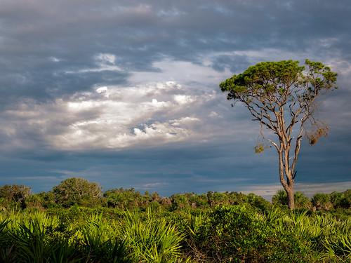 usa landscape tree cloud ©edrosack pine sky centralflorida panorama merrittislandnationalwildliferefuge nature florida cloudy minwr mims