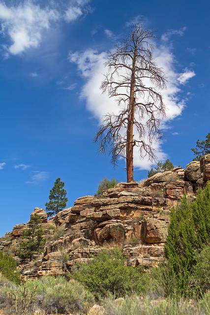 Dead-Tree-20-7D1-053018
