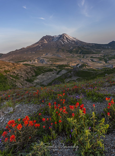 Wild Flowers at Mt St Helens (Mt St Helens National Volcanic Monument, WA). It was taken before sunset.