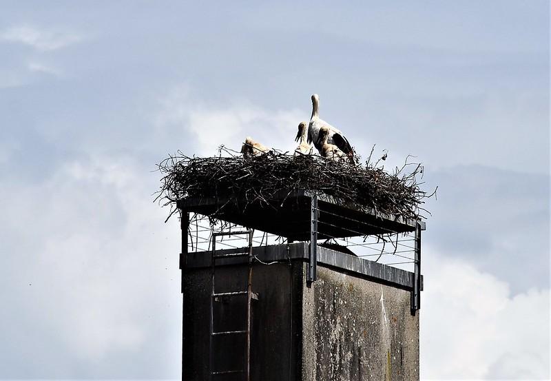 Storks 10.06 (2)