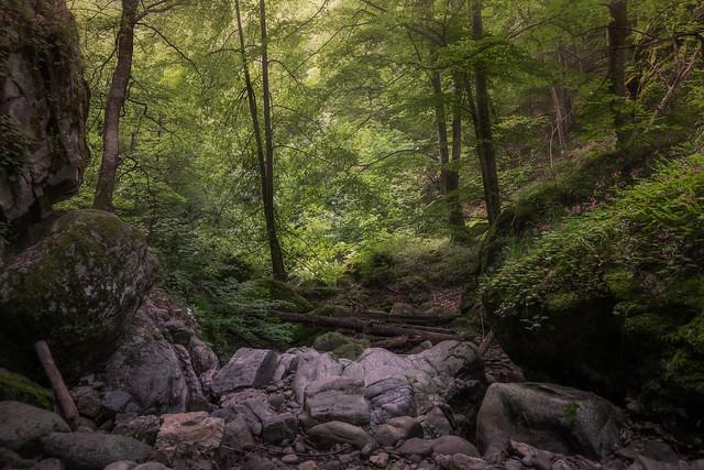 Forest..., Fujifilm X-T1, XF18-55mmF2.8-4 R LM OIS