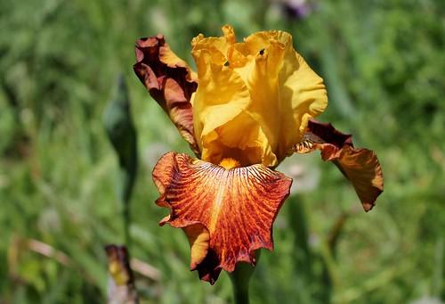 les jardins sont beaux en mai ! - Page 5 27476683477_99ec37b1b3