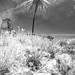 Ruined Windmills Salgados Algarve by alanrharris53