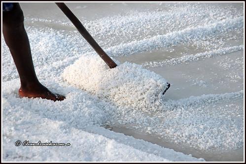 marakkanam salt saltpans production crystalseasalt tamilnadu india canoneos6dmarkii tamronef28300mm