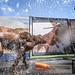 DockDogs - 2018 GoPro Mountain Games
