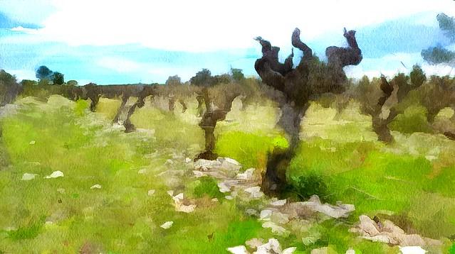 La vigne en garrigue