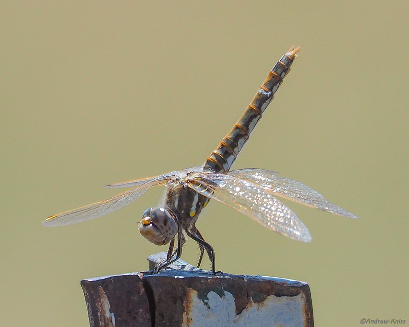 Dragonfly on a fence post