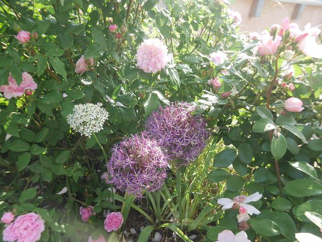 les jardins sont beaux en mai ! - Page 5 41521923855_fa0b888ed8_z