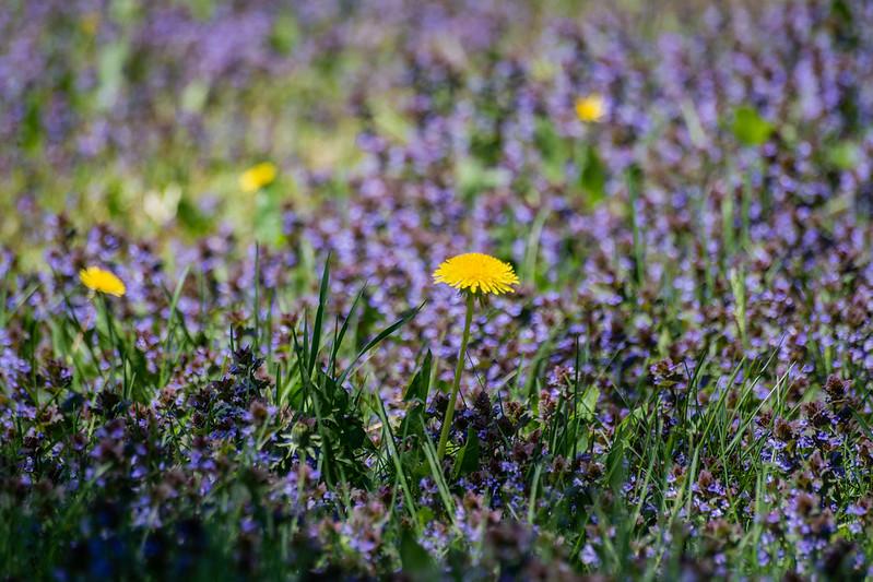 Une fleur pour Monet