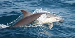 Dolphin display