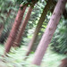 Trees ICM by Colin Smith