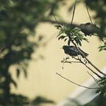 20180528-162034 - Garden Birds Bokeh