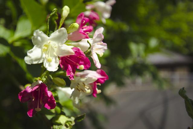 flower, Canon EOS KISS X4, Sigma 10-20mm f/3.5 EX DC HSM