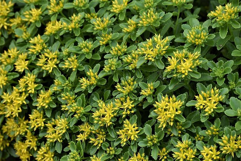 Wild Flowers 31.05 (2)