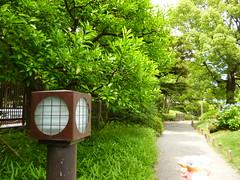 Audino in Fukagawa, Tokyo 198 (Kiyosumi Garden)