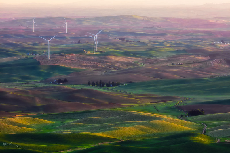 Palouse Wheatland