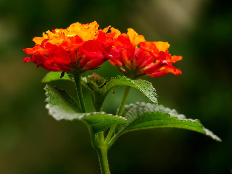 20180527-Pixelgrafie-Botanischer-Garten-Porrentruy
