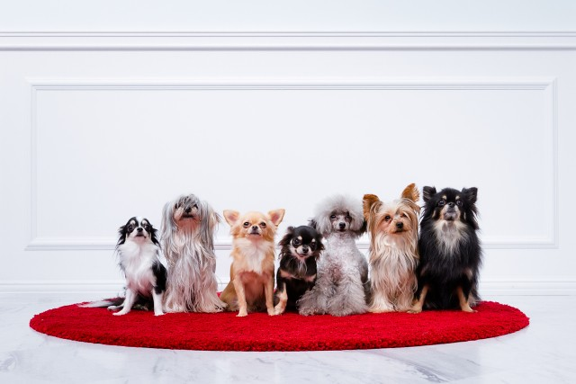 ドッグランで室内遊びを楽しむ色々な犬
