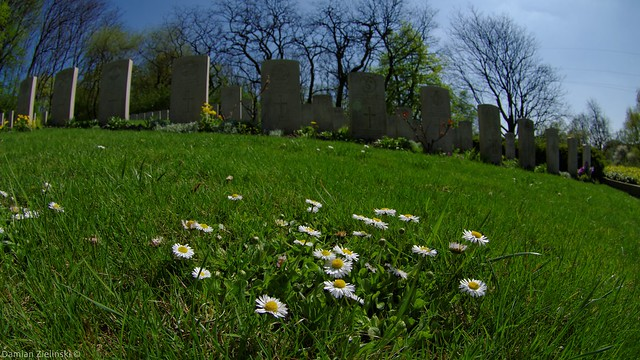 The present and the past - Daisies on Poznań Old Garrison Cemetery