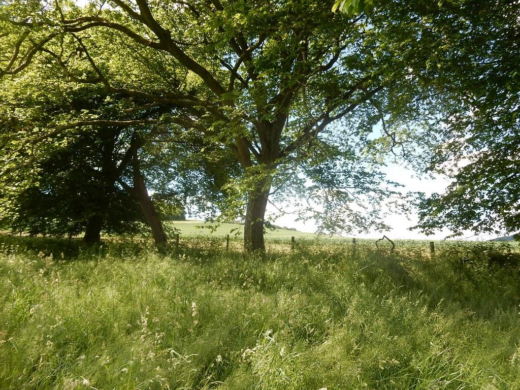 Pastoral scene Saunderton Circular via West Wycombe