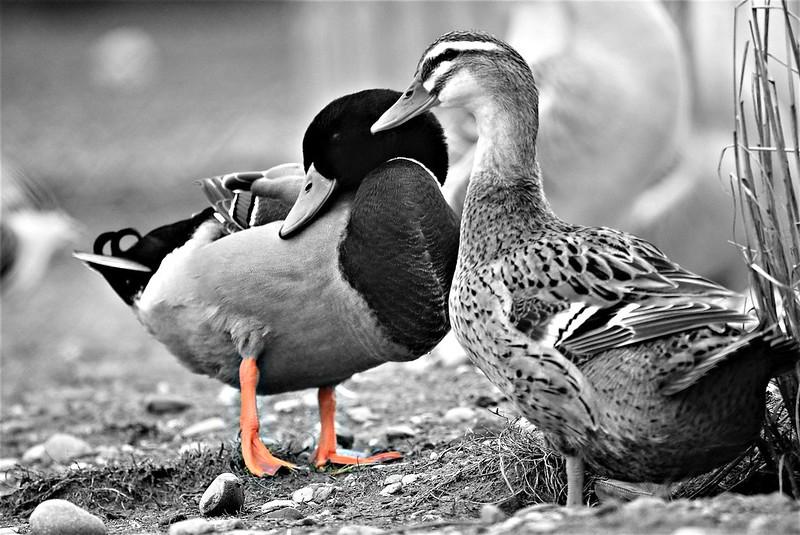 Goose 21.01 (3)