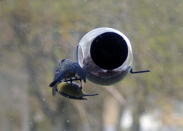 birdfeederC09117