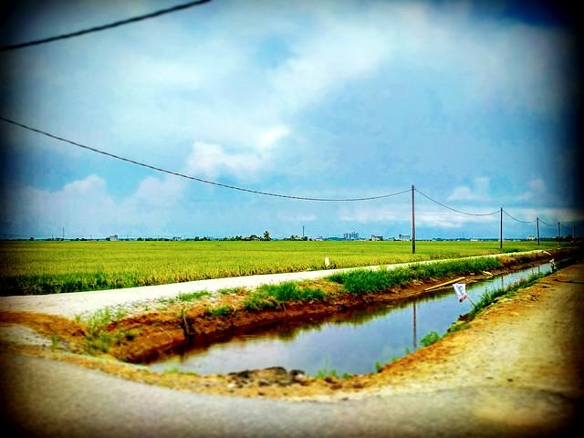 Sekinchan, Selangor https://goo.gl/maps/656R1LaP8Kv  #travel #holiday #traveling #trip #Asian #Malaysia #旅行 #度假 #亚洲 #马来西亚 #วันหยุด #การเดินทาง #ホリデー #휴일 #여행 #Sekinchan #Selangor #праздник #путешествие #田地 #field #nature #travelmalaysia #สนาม #フィールド #들 #п