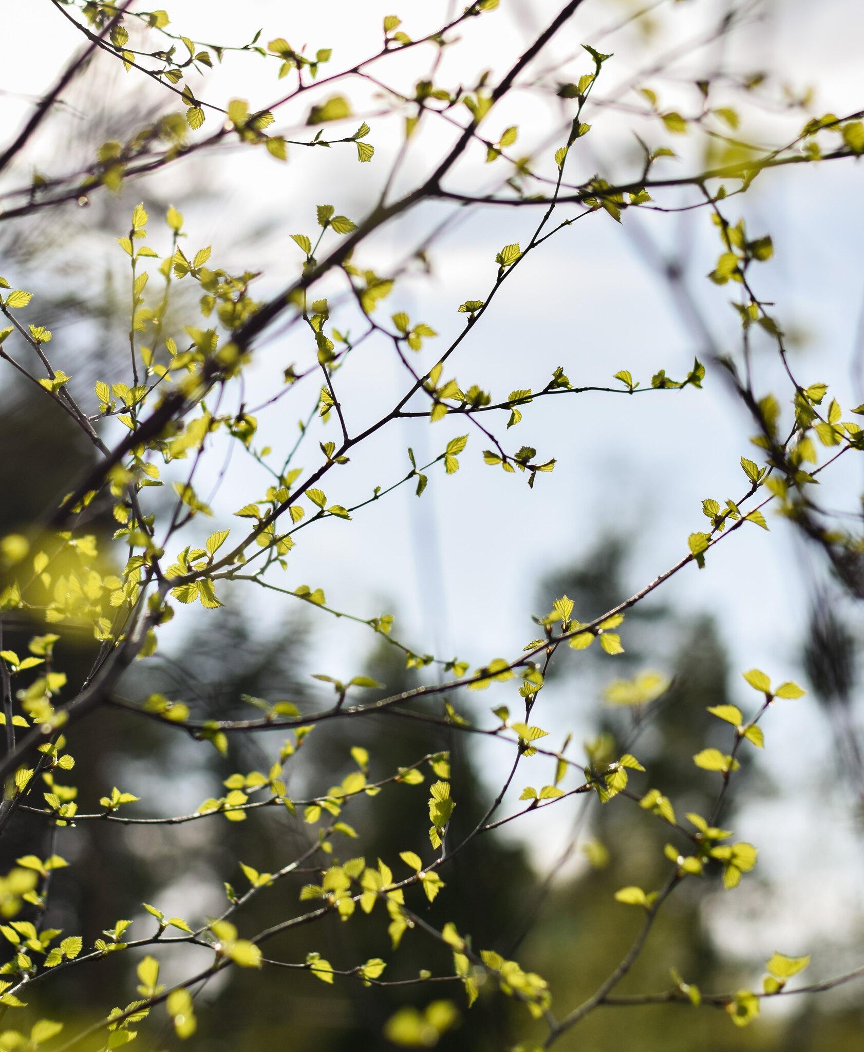 kevät1