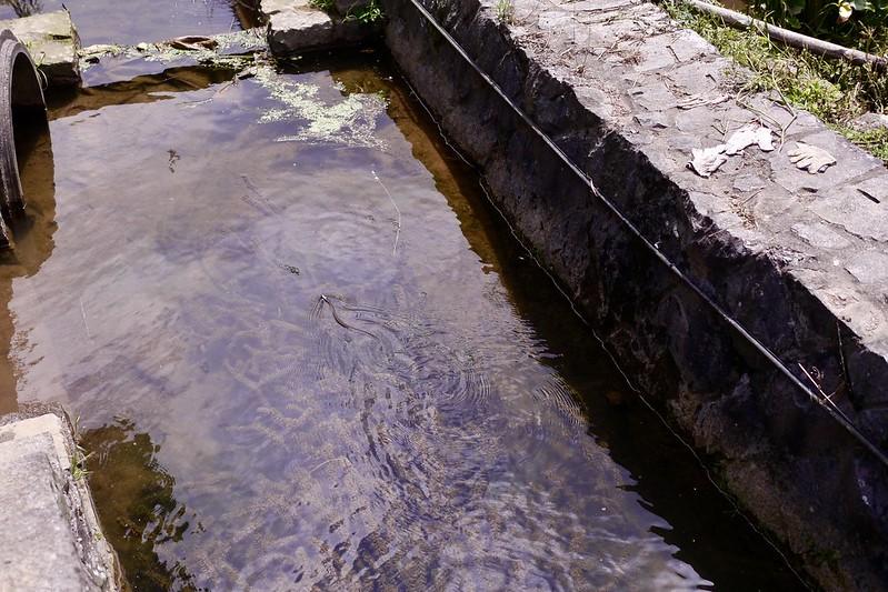 竹子湖水尾