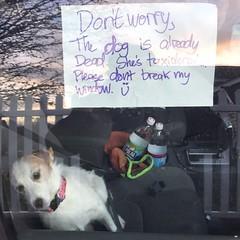 the dog is already dead, please don't break my window=)