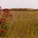 South Gare Flowers 5