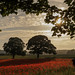 Northumberlands Most Popular Field