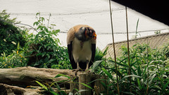 Colchester Zoo-61