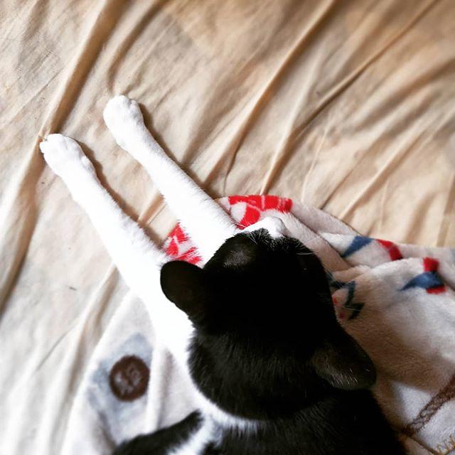 20180613 宅貓日常 #戴家黑糖蜜 #cats #livingwithcats