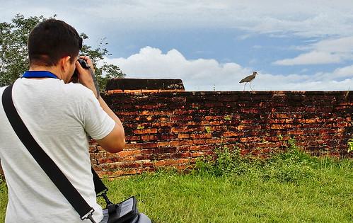 Fotografando um Quero-Quero