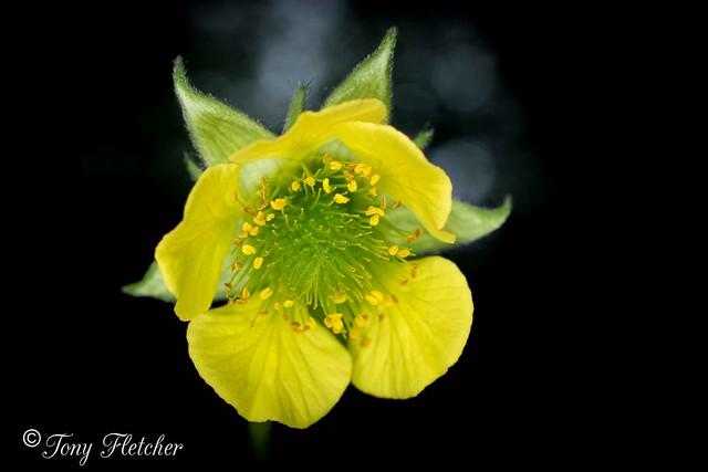 'WILD FLOWERS' - 'RAILWAY, Nikon D3300, AF-S DX Micro Nikkor 40mm f/2.8G