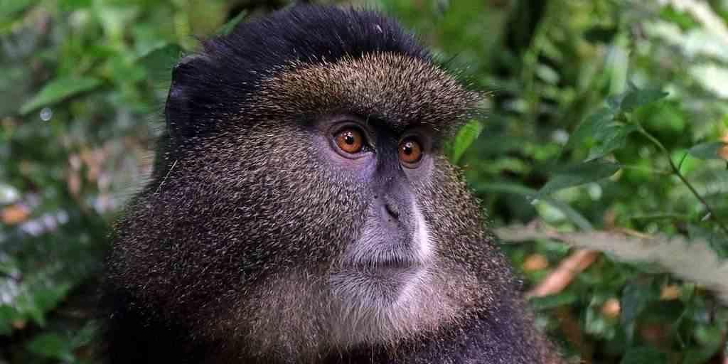 PrimNet : Une technologie pour protéger les primates