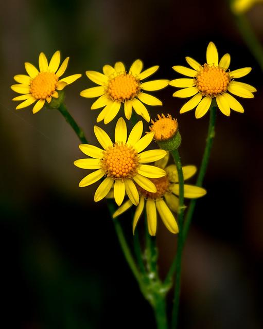 Wild-Flowers-2-7D2-052618