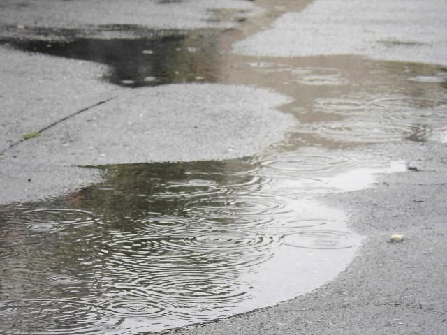 雨の日の散歩道