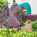 Gamecock Topiary 2