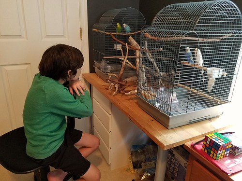 No more fighting parakeets